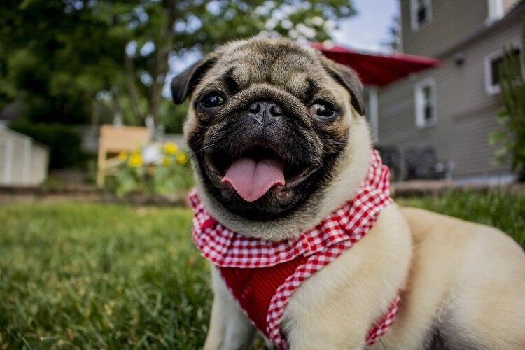 """Valadez Azúa destacó en la conferencia """"Ensamble vidas de perros. Acercamientos Interdisciplinarios a las presencias caninas en la historia"""", que la convivencia entre los perros y los hombres siempre ha sido afín. (Foto: Pixabay)"""