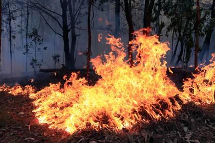 La Secretaría de Medio Ambiente capitalina explica que hablamos de incendiocuando la superficie afectada es mayor a 1.000 metros cuadrados. Si logra controlarse y nosupera esa extensión, se denomina conato (Foto: Cuartoscuro/Margarito Pérez Retana)
