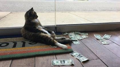 Su nombre es Sir Whines y tiene un especial fanatismo por el hurto de billetes a transeúntes (CASHnip Kitty)
