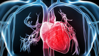 Está comprobado que ayunar favorece el funcionamiento del corazón. Shutterstock 162