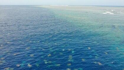 Las imágenes fueron tomadas por un drone de científicos australianos que estudian el comportamiento de las tortugas verdes (Reuters)