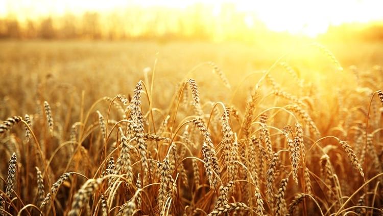 Previo a esta decisión, las compras extra bloque tenían un arancel del 10%, lo que brindaba a la Argentina una ventaja competitiva significativa, al tratarse del principal vendedor de trigo que tiene Brasil.