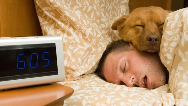 Los encuestados por la Clínica Mayo de Estados Unidos revelaron que cuando duermen con sus mascotas se sienten más seguros y relajados. (Getty)