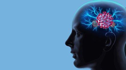 Un estudio exploró las consecuencias del coronavirus en el cerebro (Shutterstock)
