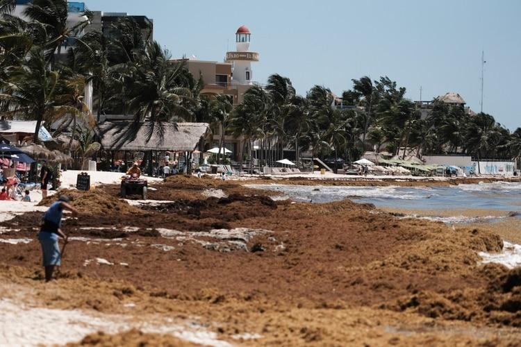 Las principales playas que podrían acumular de forma excesiva son la Bahía Petempich y Puerto Morelos (FOTO: ELIZABETH RUÍZ /CUARTOSCURO)