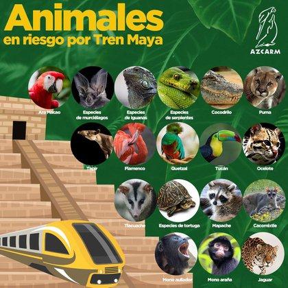 Especies en peligro por el Tren Maya (Foto: Cortesía)