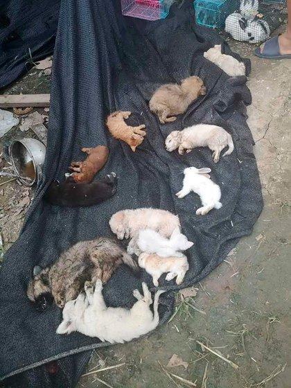 Perros, gatos y conejos estaban entre los animales encontrados (Utopia Animal Rescue)