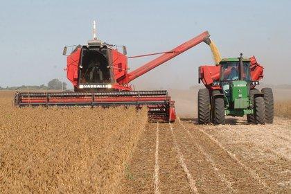 Las proyecciones de la Bolsa de Rosario plantean un escenario de caída de producción en la actual campaña agrícola, que será compensada por un aumento de los precios internacionales (EFE)
