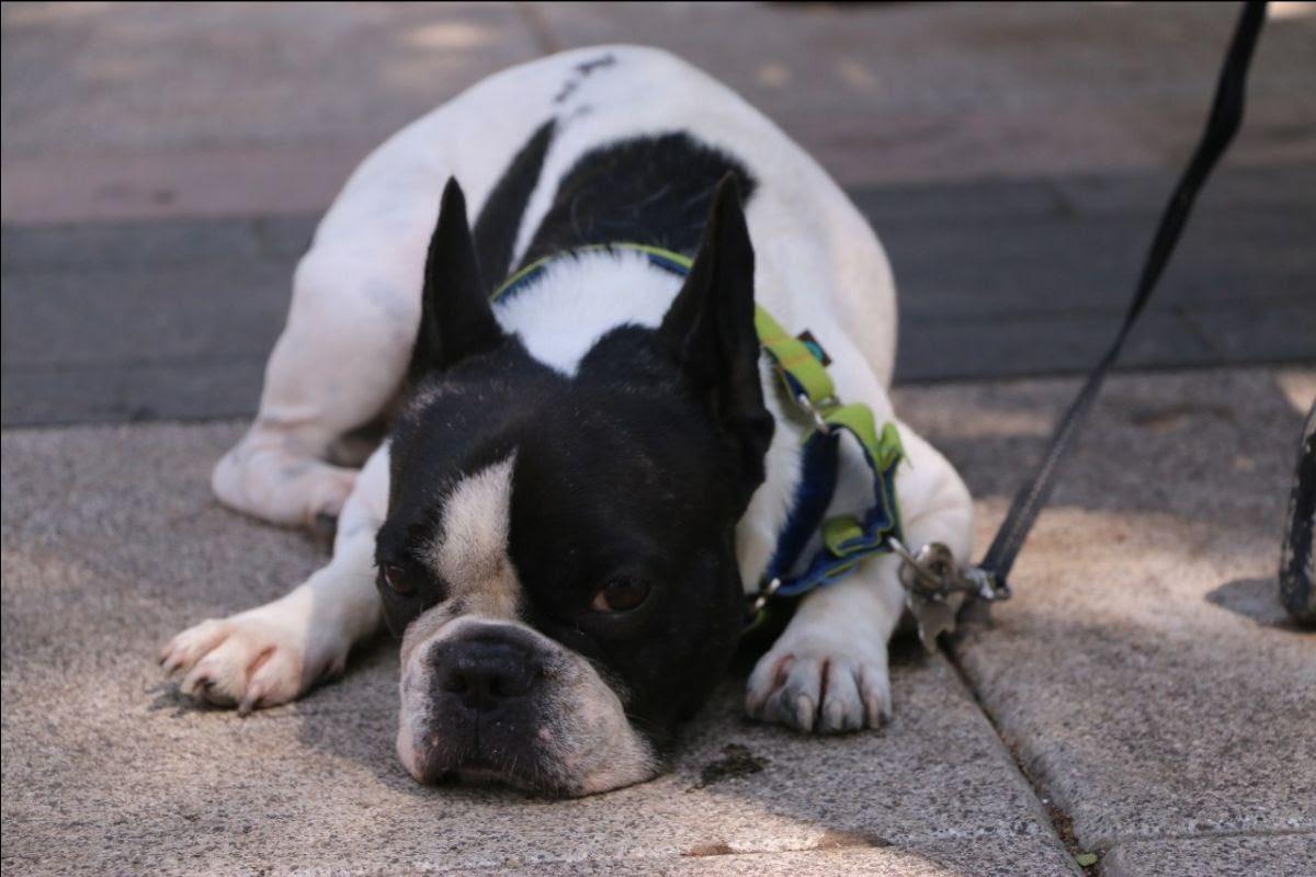 Alertan sobre los riesgos para las mascotas por las celebraciones de Año Nuevo con pirotecnia