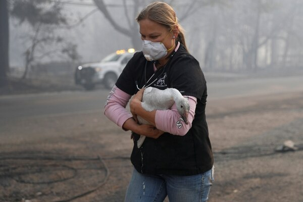 Una mujer salva un ganso del incendio. REUTERS/Stephen Lam