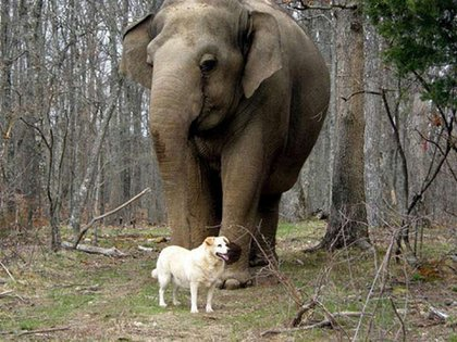 Su amistad se desarrollo en el Santuario de elefantes de Tennessee