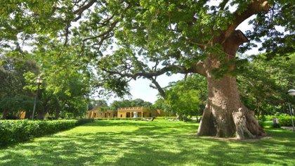 Campus del Museo. Foto: Fundación Museo Bolivariano de Arte Contemporáneo-Quinta de San Pedro Alejandrino.