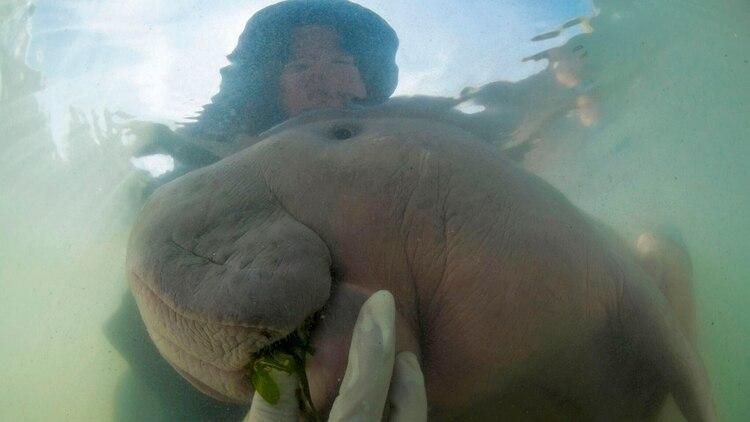 Una cuidadora alimenta a Marium (Sirachai Arunrugstichai via AP)