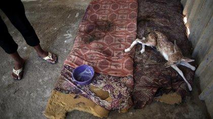 Los animales vivían en pésimas condiciones en el Zoológico Khan Younis (AP)