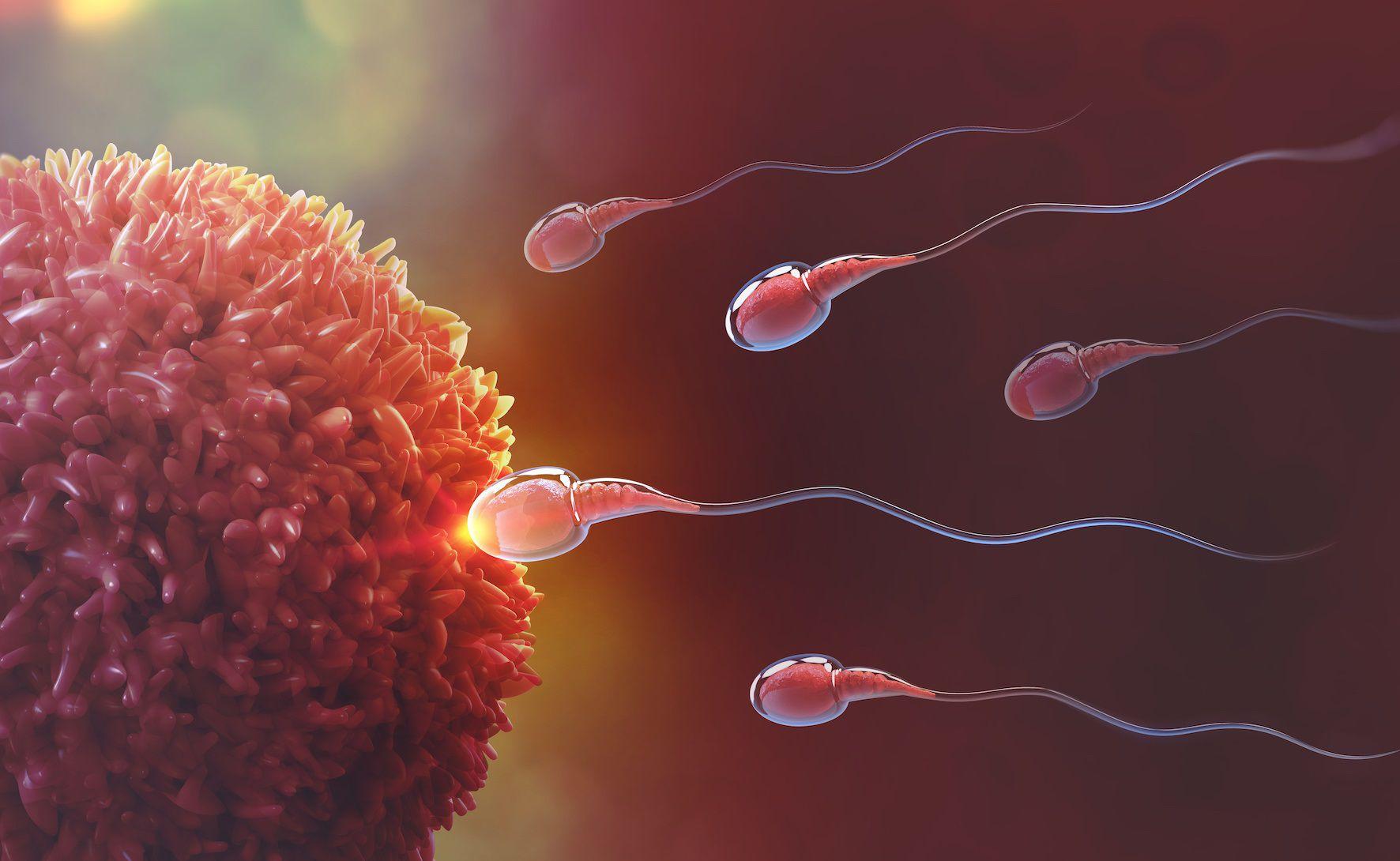 16/06/2020 Infertilidad SALUD ESPAÑA EUROPA COMUNIDAD VALENCIANA SOCIEDAD IVI