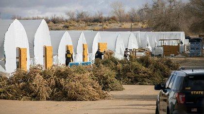 Indios navajos e inmigrantes chinos: la inverosímil sociedad criminal que terminó en el decomiso más grande de marihuana en EEUU