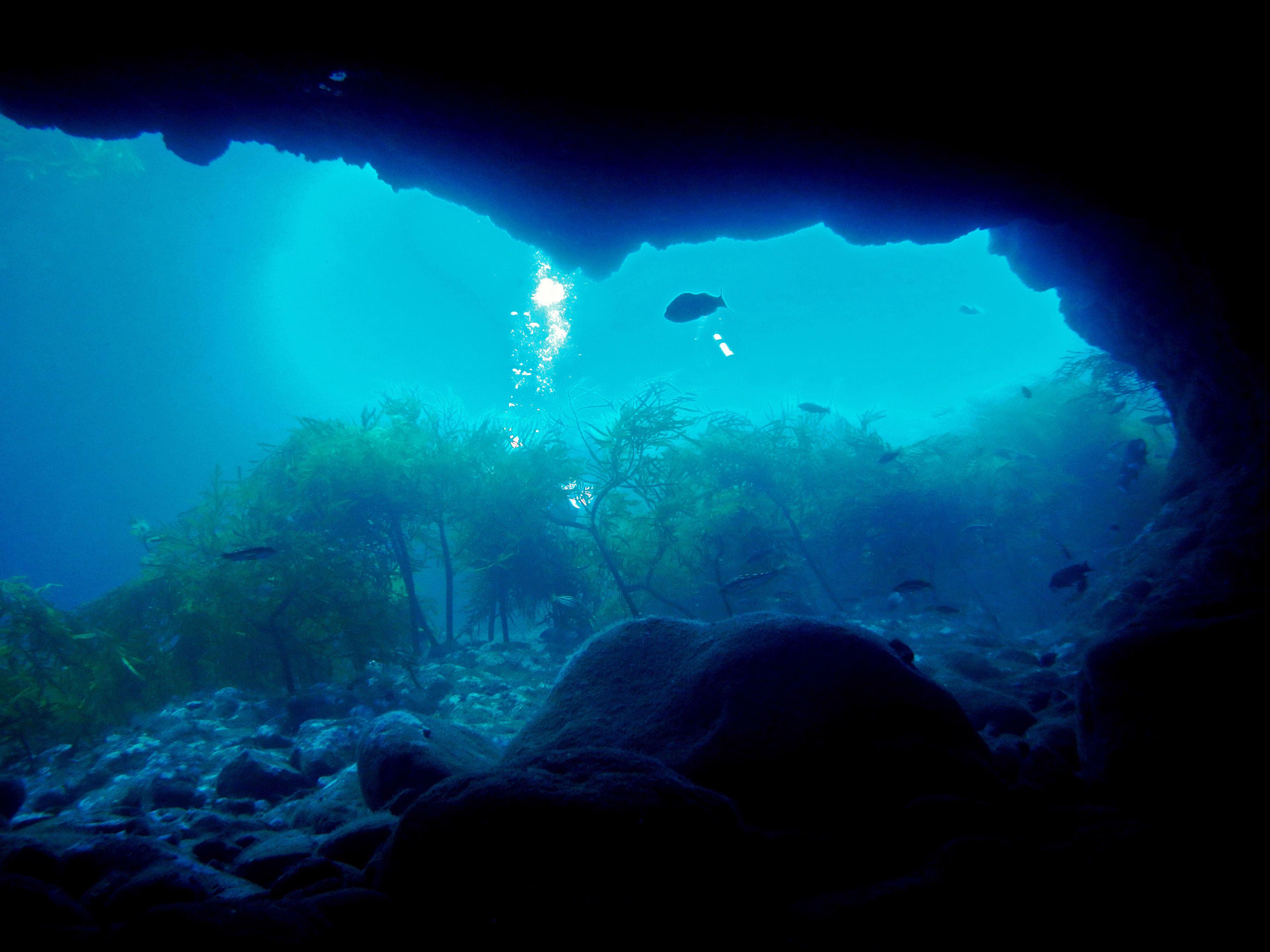 En el mar de Cortés habita el 39% de los mamíferos marinos conocidos en el mundo. (Foto: Semarnat)