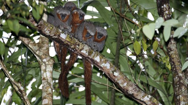 Descubren 381 nuevas especies en la Amazonía de Brasil