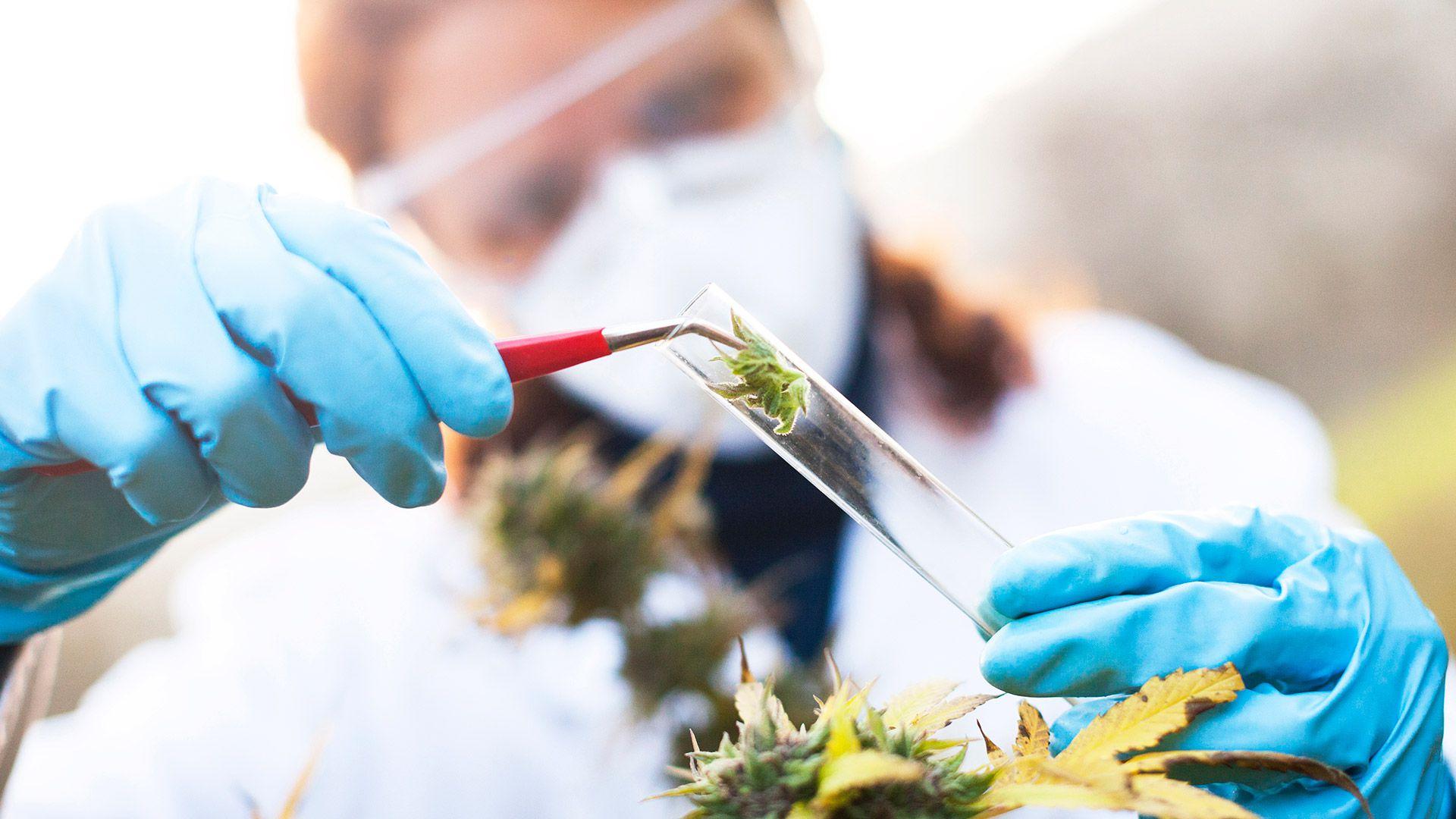 cannabis medicinal epilepsia