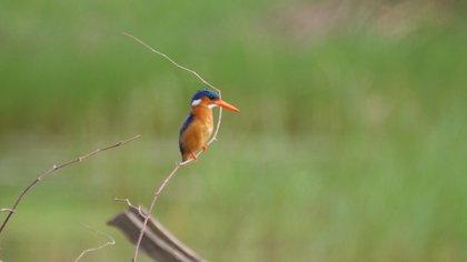 La flora y fauna es muy diversa y rica en los humedales