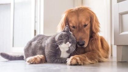 Día del Animal en Argentina: las diez razas de perros y gatos más buscadas