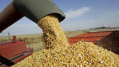Amplio rechazo a la intervención del gobierno en el mercado de maíz