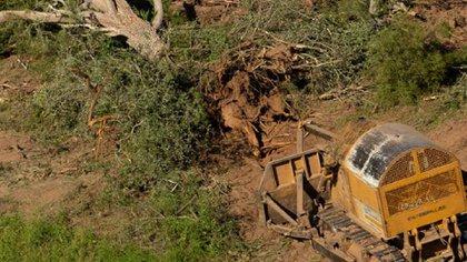Durante 2019, se perdieron 80.938 hectáreas de bosques en las cuatro provincias con más desmontes del país: Santiago del Estero, Chaco, Formosa y Salta (Greenpeace)