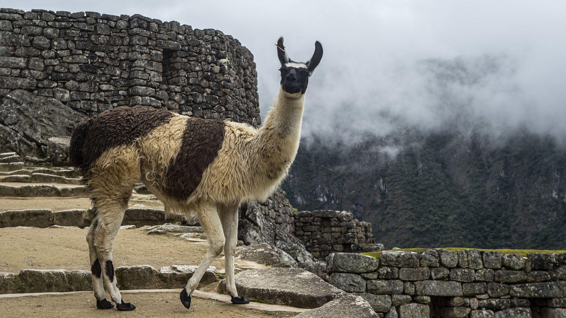 reabrieron Machu Picchu