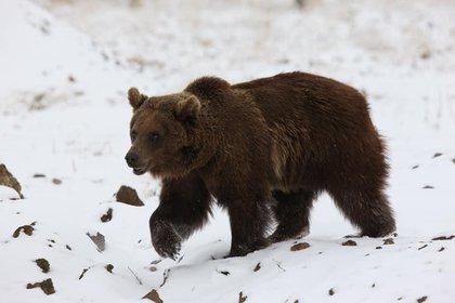 Adaptaciones claves como la hibernación de osos pardos, acumulación de grasa en la joroba de un Dromedario, las resistencia de ciertas plantas al fuego o la desecación han generado una diversidad de vida