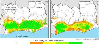 La imagen grafica la involución de la producción de cacao en el mundo (NOAA)