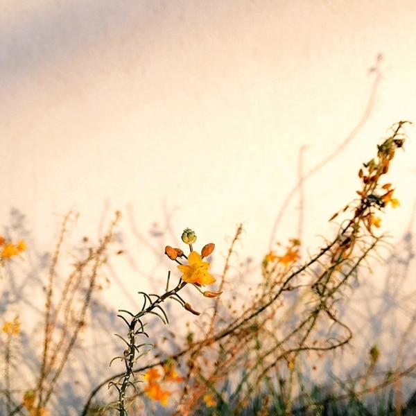 """En la categoría """"Flores"""" el primer lugar fue para Alison Helena con """"Lights"""" (Luces), quien tomó la foto con un iPhone 7 en Santa Bárbara, California, Estados Unidos."""