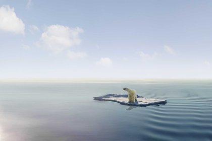 Las concentraciones de hielo marino se han ido disminuyendo en un 13% por década, desde 1979, por el incremento de la temperatura global (Shutterstock)