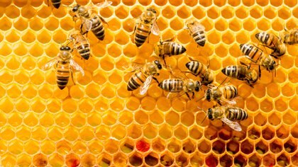 Las muchas propiedades del producto que las abejas producen (iStock)