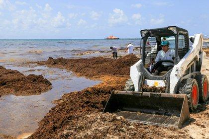 Playa del Carmen, Quintana Roo, el 3 de mayo. La Secretaría de Turismo local anunció que del 27 al 29 de mayo se realizará en Cancún el Encuentro Internacional con países del Caribe para tratar la contingencia del sargazo; fueron convocados 17 ministros de turismo y medio ambiente. (Foto: Elizabeth Ruiz/Cuartoscuro)