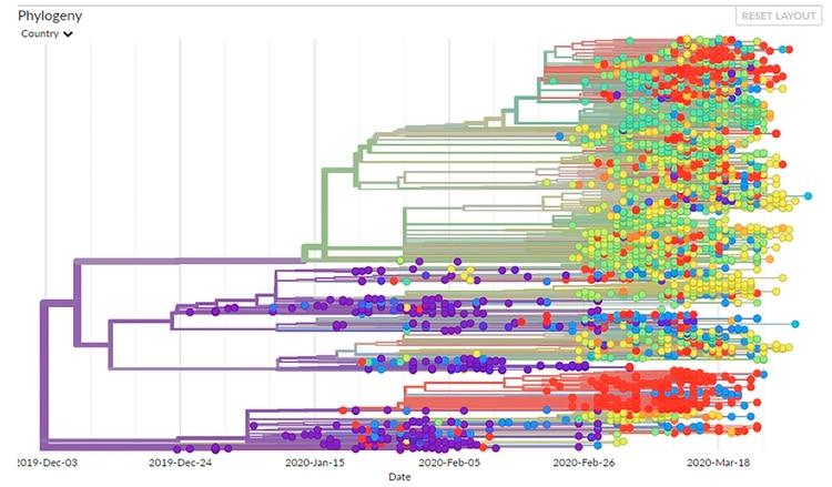 Mapa de cómo evolucionó el SARS-CoV-2 en tres meses de propagación (Nextstrain)
