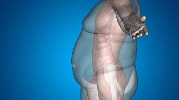 El número de casos de obesidad a nivel mundial casi se ha duplicado desde 1980 (Shutterstock)