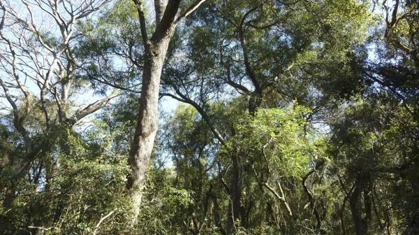 Una pequeña reserva natural privada, modelo de lo que puede hacerse para preservar flora y fauna nativas (foto: R.Peiró)