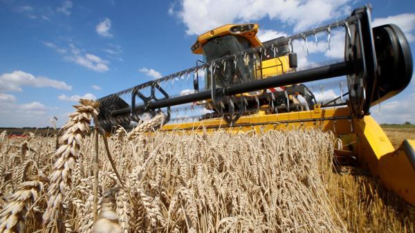 El último trimestre se caracterizará por el repunte de la cosecha fina y de la actividad de la construcción (Reuters)