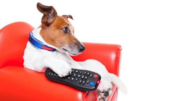 Qué observan los perros cuando ven la televisión