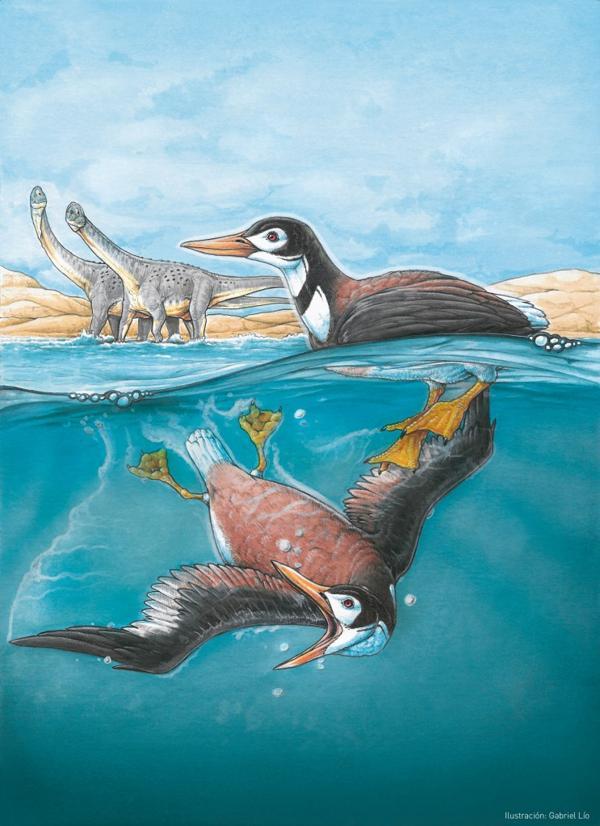 Se detectó que el ave tenía una capacidad de sumersión por un largo período de tiempo (Gabriel Lío)