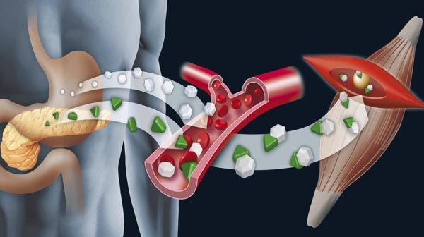 El páncreas artificial, creado por científicos argentinos, mejorará la calidad de vida de pacientes insulino-dependientes