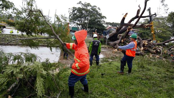 Removieron el árbol que cayó sobre un coche y mató a un menor en Panamá (EFE)